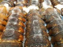 Caudas de lagosta congeladas fotos de stock