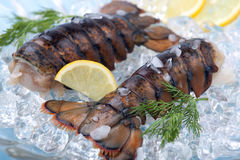 Caudas de lagosta cruas Imagem de Stock