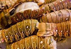Caudas de lagosta frescas imagem de stock