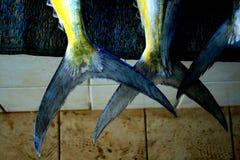 Caudas dos peixes Fotos de Stock Royalty Free
