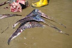 Caudas dos peixes na areia fotos de stock