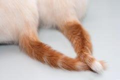 Caudas entrelaçadas Imagem de Stock