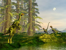 Caudipteryx and dilong dinosaurs - 3D render Royalty Free Stock Image