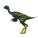 Caudipteryx Side Profile Stock Images
