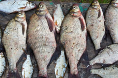 Caught bream on wooden table Royalty Free Stock Photography