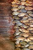 Caught carp fish on wood. Catching freshwater fish on wood background. A lot of bream fish, crucian or roach on natural. Fresh caught carp fish on wood. Catching Stock Photo