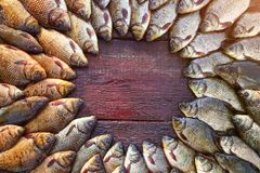 Caught carp fish on wood. Catching freshwater fish on wood background. Round a lot of bream fish, crucian or roach on stock image