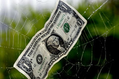 Caught In A Financial Web. A US dollar caught in a spider's web portrays the business concept of financial debt or overspending royalty free stock images