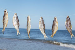 Caught fish drying on rope Stock Photography