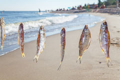 Caught fish drying on rope Stock Photos