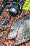 Caught fish and fishing tackle on a wooden table Royalty Free Stock Image