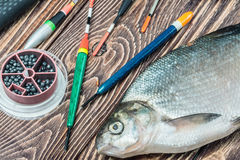 Caught fish and fishing tackle on a wooden table Stock Images