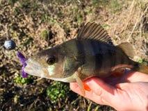 Caught fish Stock Photo