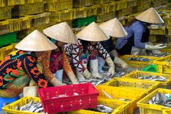 Caught fishes sorting to baskets by Vietnamese women workers in Tac Cau fishing port, Me Kong delta province of Kien Giang, south. Of Vietnam Stock Photo