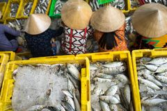 Caught fishes sorting to baskets by Vietnamese women workers in Tac Cau fishing port, Me Kong delta province of Kien Giang, south. Of Vietnam stock image