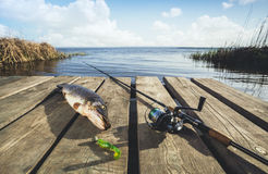 Caught from freshwater big fish - a pike, lying near the spinning on the wooden bridge Royalty Free Stock Photography