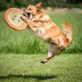 Caught Frisbee Royalty Free Stock Image