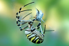 Free Caught In The Web Stock Image - 61688581