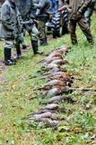 Caught pheasants. Excludes of caught pheasants still life Royalty Free Stock Image
