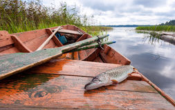 Caught pike lies in a fishing boat Royalty Free Stock Photo