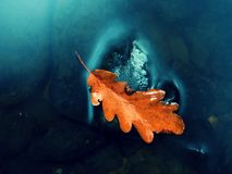 Caught rotten old oak leaf on stone in blurred water of mountain river Royalty Free Stock Image