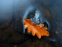 Caught rotten old oak leaf on stone in blurred water of mountain river Stock Photos