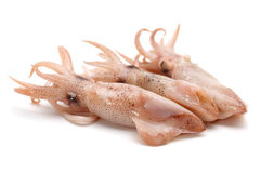 Caught squid Royalty Free Stock Image