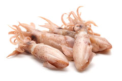 Caught squid Royalty Free Stock Photography