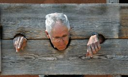 Caught in the Stockade. Senior male tourist pretends to be caught in a wooden stock. His head and hands are inserted through the cut holes royalty free stock photos