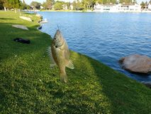 Sun fish stock photography