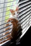 Caught Sunbathing. Tabby cat on window sill surprised stock image