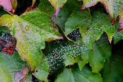 Caught in a web of leaves. Royalty Free Stock Photos