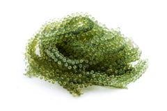 Caulerpa green caviar raw food Royalty Free Stock Photography