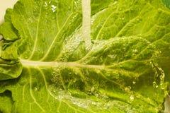 Cauli leaf being washed Stock Photo