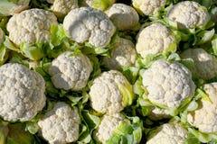 cauliflower органический Стоковая Фотография