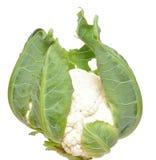 cauliflower свежий Стоковые Изображения RF