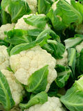 Cauliflower. On a marketplace. Diffused lighting through the semitransparent tent Stock Photos
