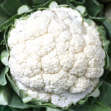 cauliflower Стоковое Изображение