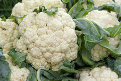 Cauliflower Stock Image