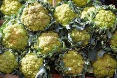 Cauliflower Стоковое Фото
