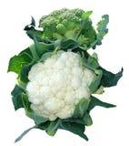 cauliflower Стоковая Фотография