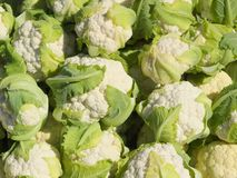 Cauliflower. Pile of cauliflowers at the market Stock Photo
