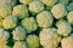 Cauliflower, Brassica oleracea var. botrytis Stock Photography