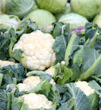 Cauliflower and cabbage Stock Images