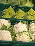 Cauliflower,cale and romanesco Royalty Free Stock Photos