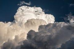 Cauliflower Cumulus Stock Images