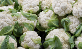 Cauliflower at the farmer's market Stock Images
