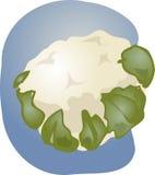 Cauliflower illustration Royalty Free Stock Images