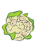 Cauliflower illustration Royalty Free Stock Photos
