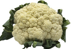 Cauliflower isolated on white background Stock Photography